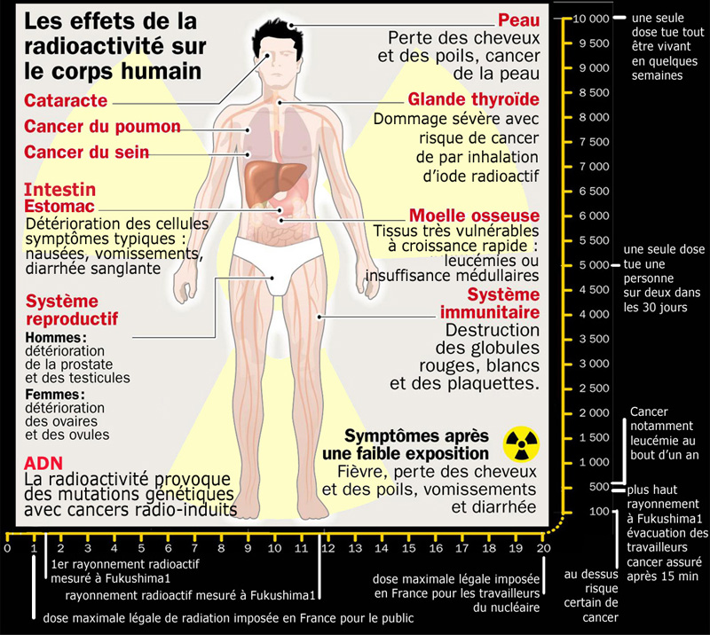 effets radioactivite sur corps humain 800